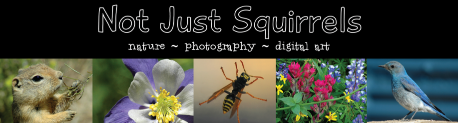 Not Just Squirrels - nature photography digital art